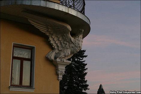 Орел под балконом