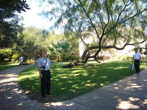 Сад внутреннего двора музея Аламо.