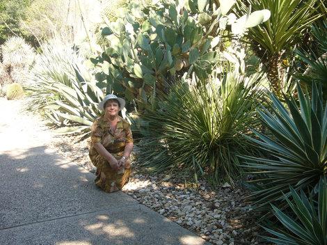 Рядом с агавами и кактусами.
