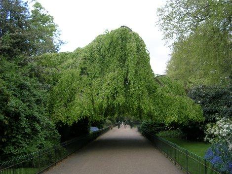 Это тоже где-то в Кенсингтонских садах