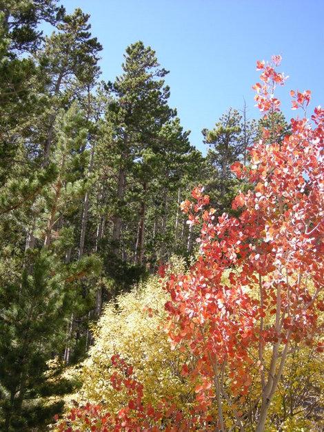 Краски  осени в горах.