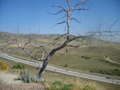 Сухое дерево.Вид на шоссе у Денвера.