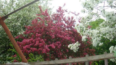 Некоторые каждый год приходят любоваться цветущей сакурой
