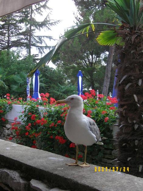 птички отеля