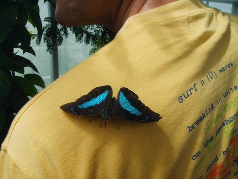 В павильоне бабочек