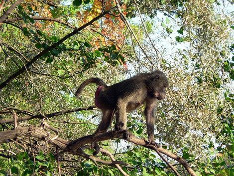 Летом на Елагин привозят обезьян. Можно взять напрокат лодку и отправиться кормить их бананами.