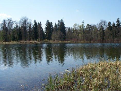 Озеро в Гатчинском парке, весна.
