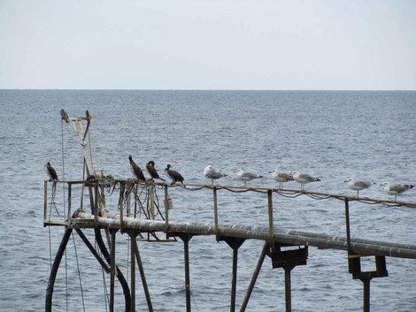 Птички (м. Утриш)