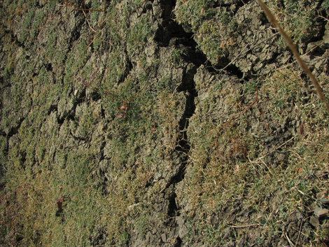 Карабетова гора: земля