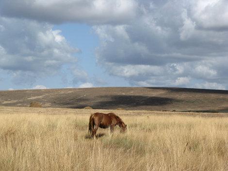 Карабетова гора: лошадка