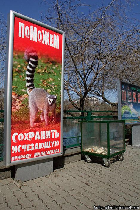 Поможем животным