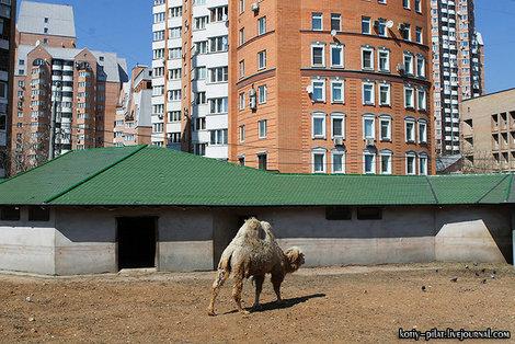 Верблюд и недвижимость