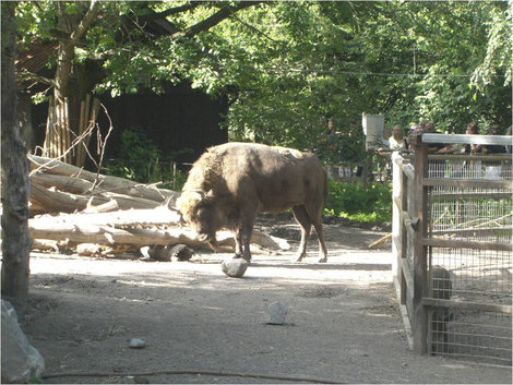 В зоопарке Стокгольм, Швеция