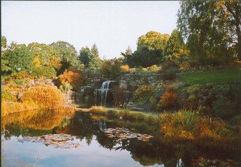 Альпийская горка в Ботаническом саду.