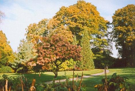 Цветущие деревья гортензии.