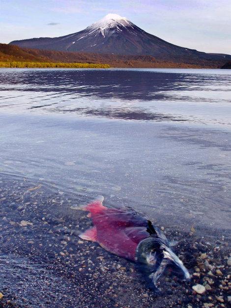 озеро Ключевое и лосось на издыханье