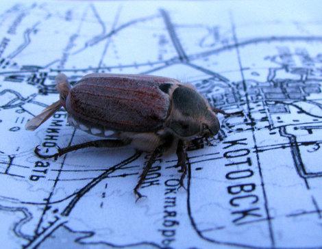 Инсектоиды пошли на Котовск