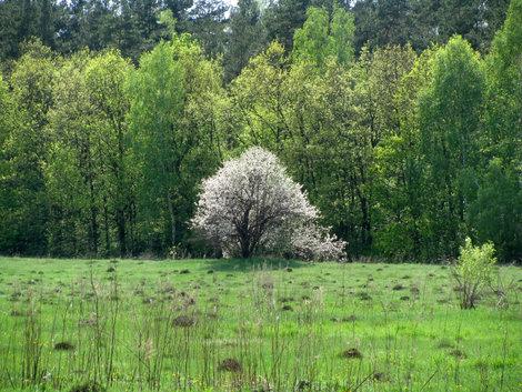 Весна..