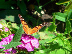 В Железноводске много цветочных клумб и бабочек, порхающих над ними.