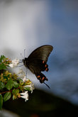 Бабочка у озера