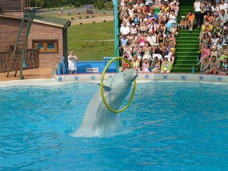 Представления в Адлерском дельфинарии всегда собирают аншлаги