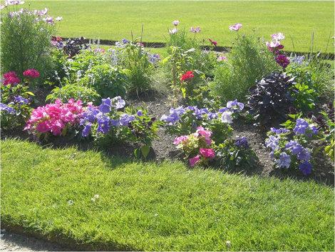 Цветы в Люксембургском саду