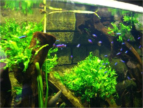 Один из аквариумов