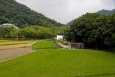 Рисовое поле у нижней станции канатки на Сёся-дзан