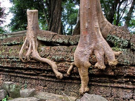 Это — одно дерево.