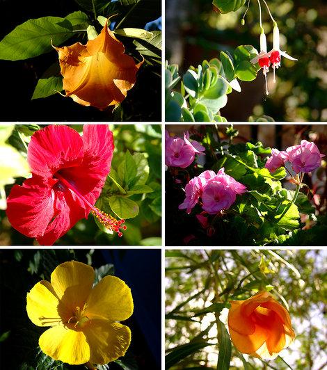 Эти живописные цветы Израиля всем женщинам.