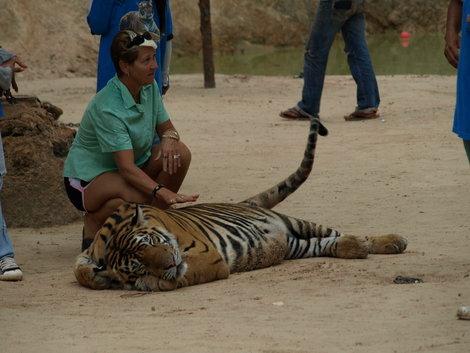 Еще тигра