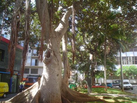 Интересное дерево