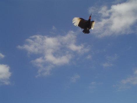 Птицы закладывали крутые виражи в небе.