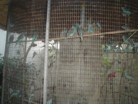 Попугайчики тоже живут на территории отеля