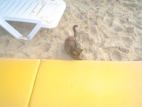 Кошки тоже любят загорать на песочке