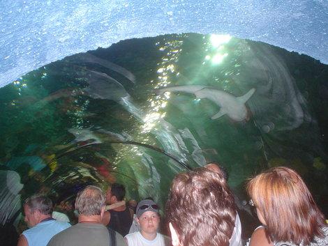 Акулы над головой