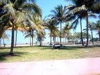 Пальмы  вдоль Ocean Dr.