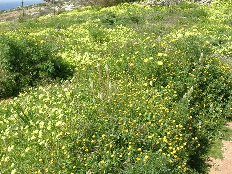 Полевые цветы у Мнайдры