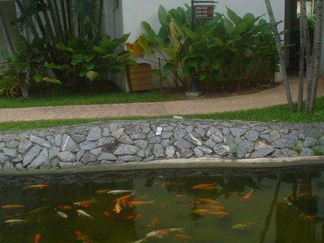 Рыбки проснулись в пруду