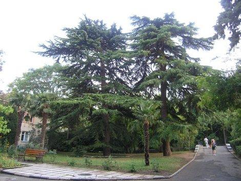 Парк военного санатория