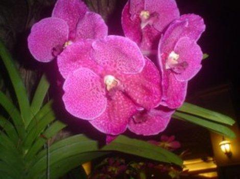 Вечерние цветы