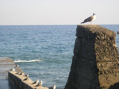 Птичьи скалы