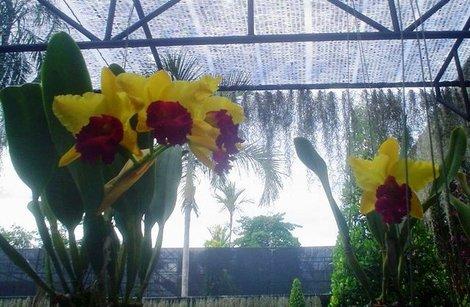 В саду собрано множество видов этих растений