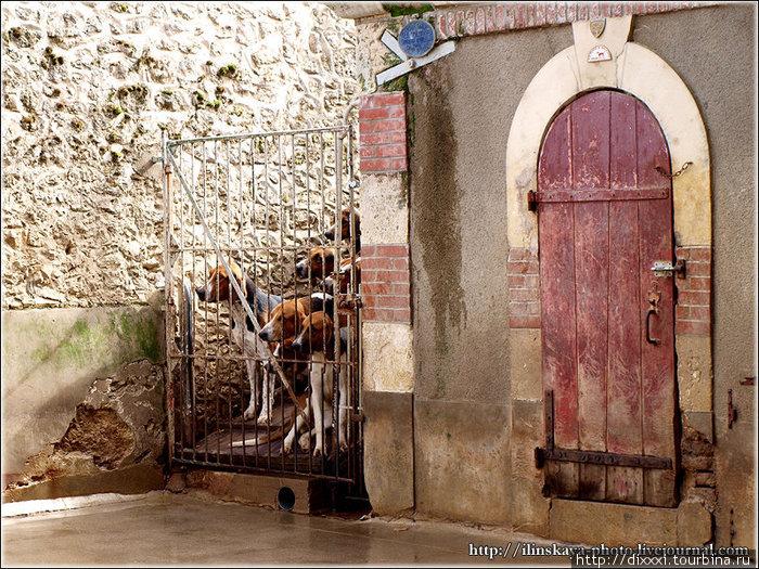замок собак картинки лью разу состояла
