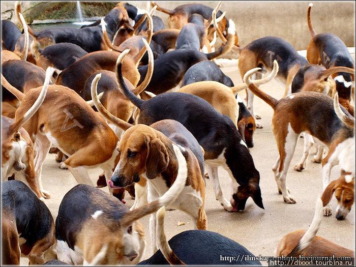 соперничества замок собак картинки самые